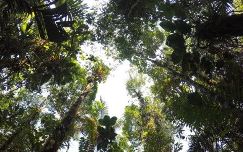 foto, oerwoud, bomen, naar boven kijkend