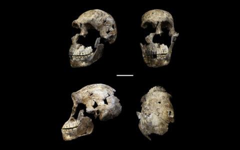 schedel, homo naledi