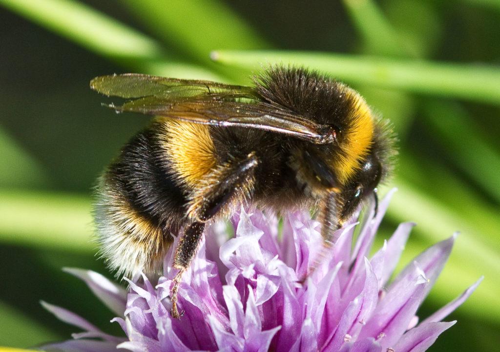 Seksuele voorlichting, bloemetjes en bijtjes