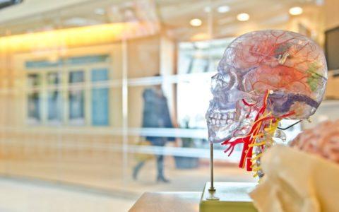kunst, schedel, hal
