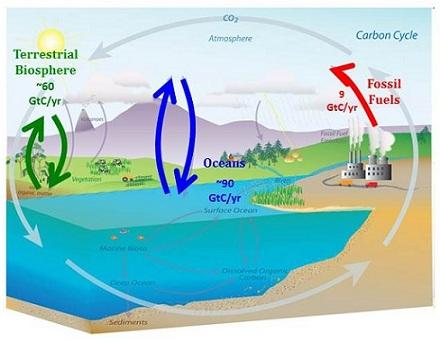 Schematische weergave koolstofkringloop