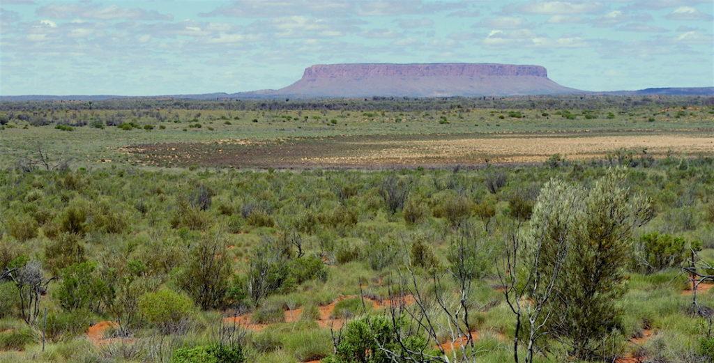 Groene vegetatie in Centraal-Australië in 2011 (Foto: Eva van Gorsel (CSIRO))