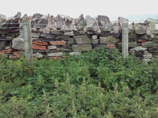 Rode en grijze stenen in een muurtje nabij Siccar Point (foto: Geert-Jan Vis).