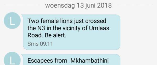 Een sms waarin wordt gewaarschuwd voor leeuwen in Zuid-Afrika