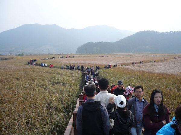 Suncheon Bay wetland, Zuid-Korea