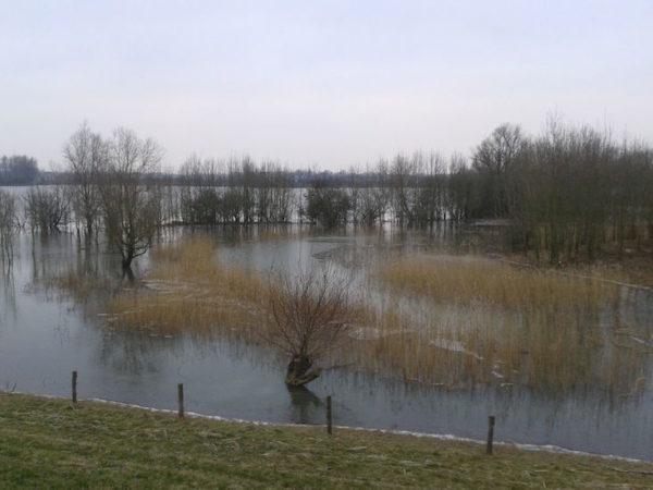 Uiterwaarden van de Rijn