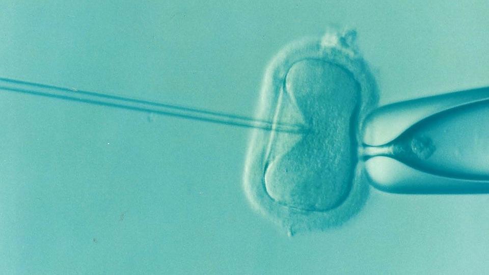 IVF-behandeling