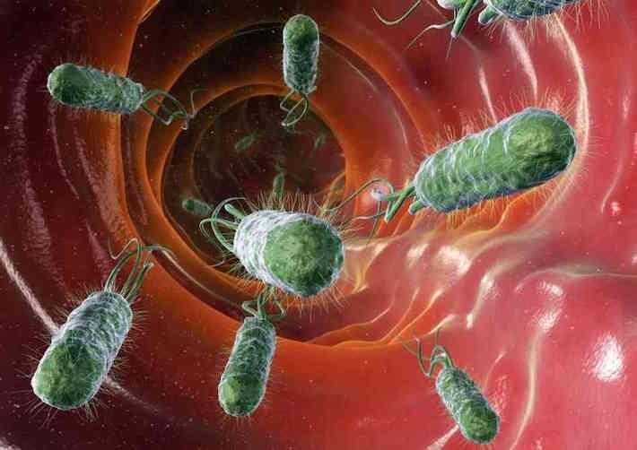 Darmbacteriën