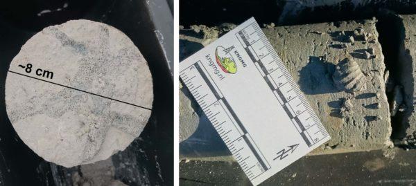 Kleine fossielen uit het Krijtgesteente
