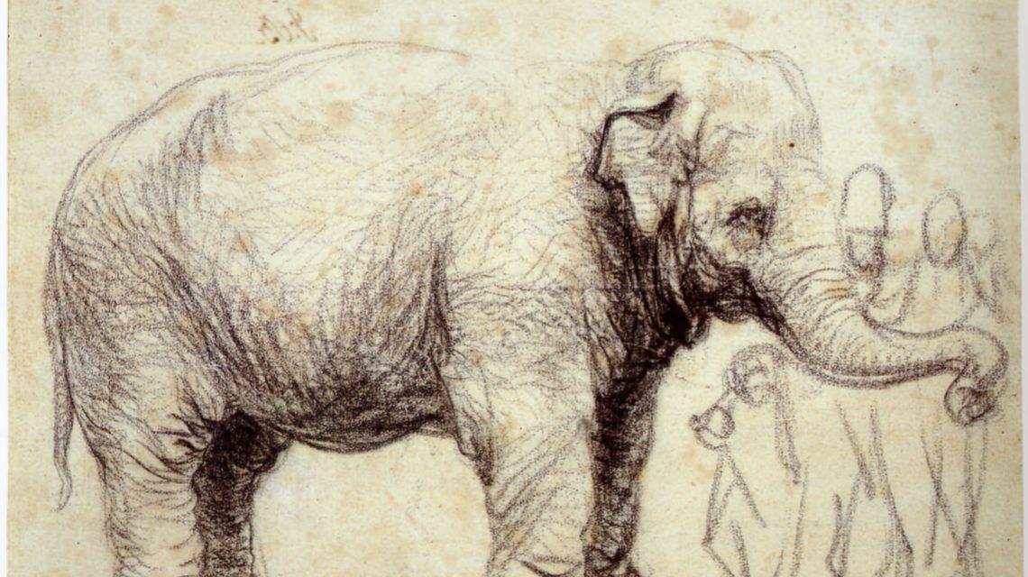 Olifant Hansken Rembrandt