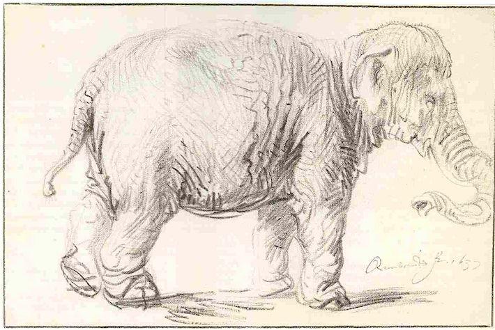 Rembrandt Olifant