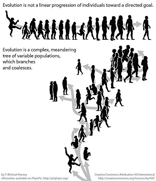 Evolutie: Ladder versus boom