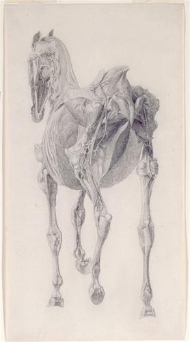 George Stubbs: Studie Spieren van het Paard