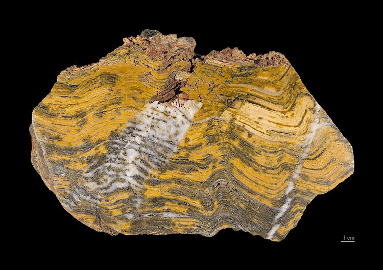 Stromatolieten uit West-Australië