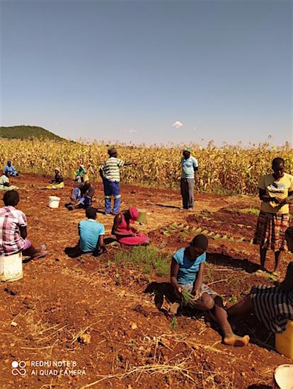 Boeren in Zimbabwe
