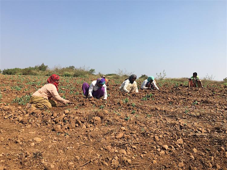 Kleinschalige landbouw India