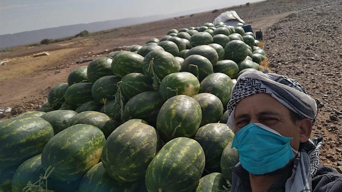 Marokko oogst watermeloenen