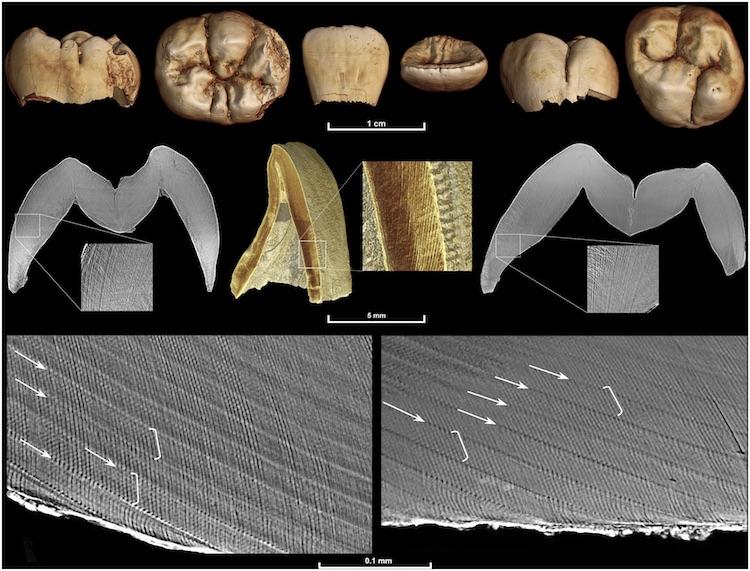 Microscopische lijntjes