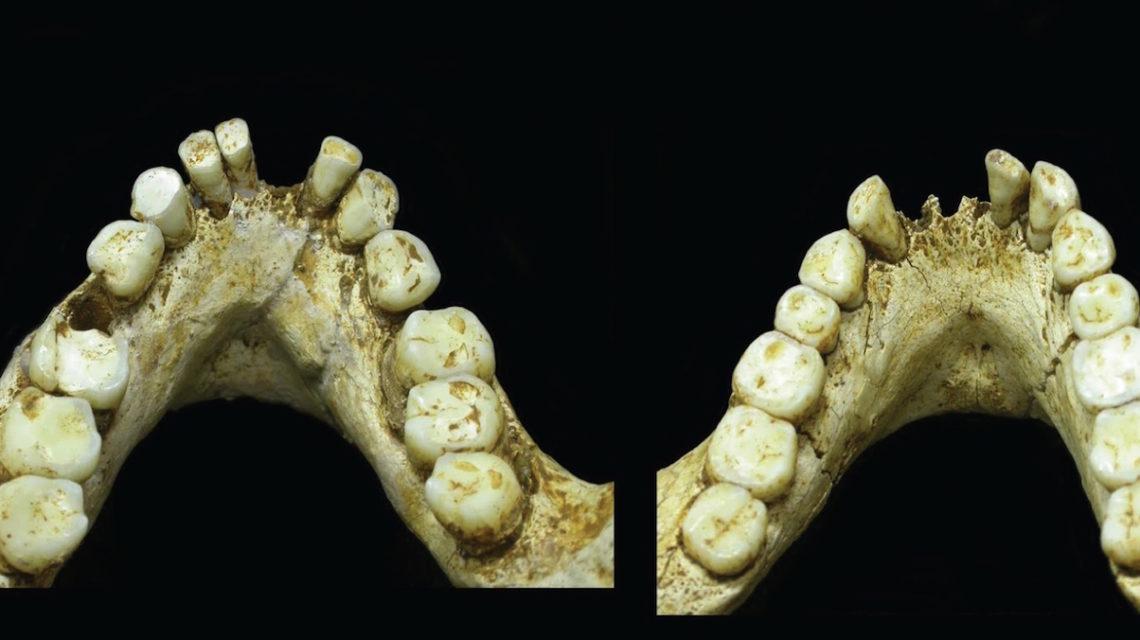 Onderkaak Homo floriensis