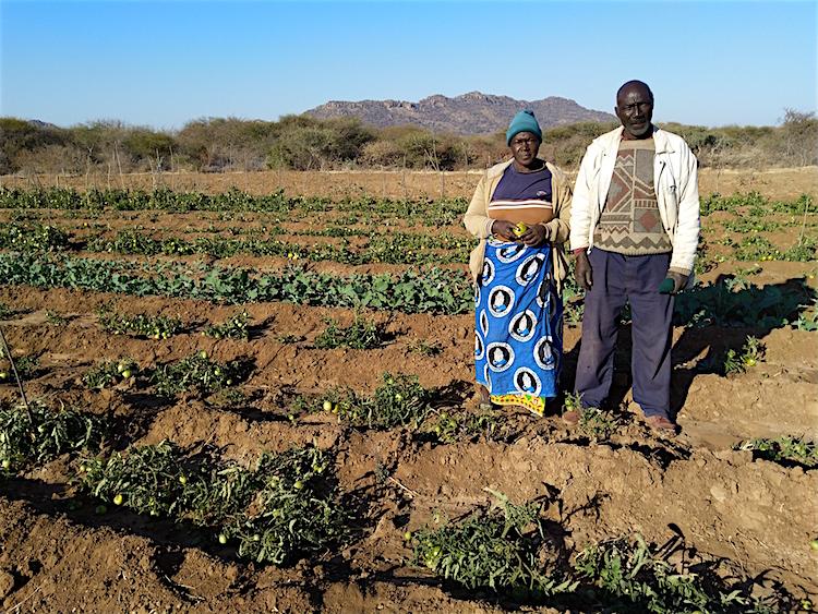 Familie Nyathi verbouwt groente, fruit en graan