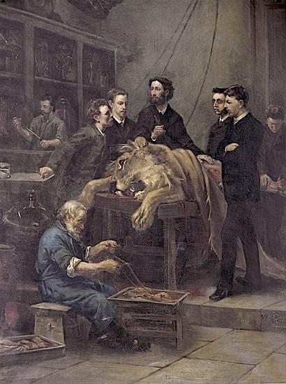 Louis Stracké, De anatomieles