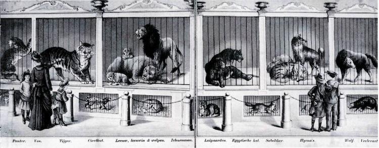 De leeuwen van Van Aken