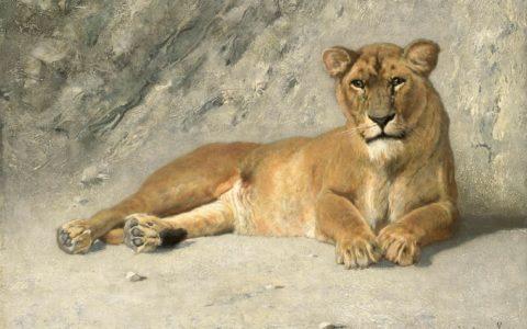 Jan van Essen Rustende leeuwin
