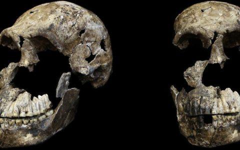 Schedelaanzichten Homo naledi