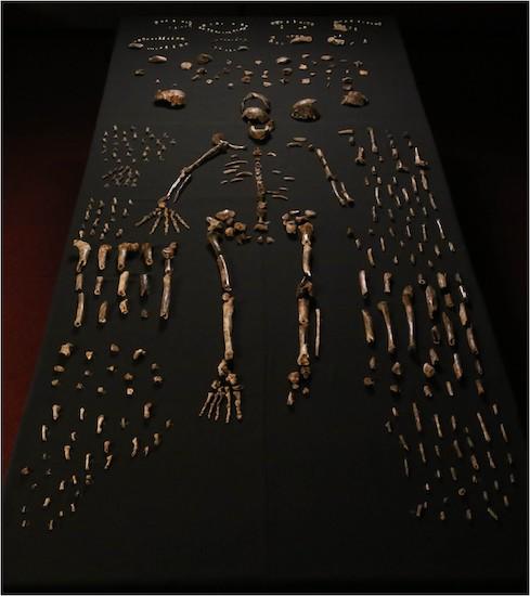 Uitgestalde Homo naledi botten